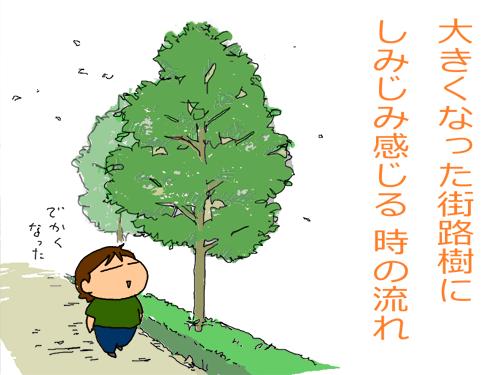 大きくなった街路樹にしみじみ感じる時の流れ