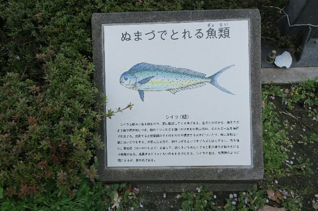 f:id:nishi0001:20170415221116j:image