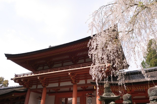 f:id:nishi0001:20180402210032j:image