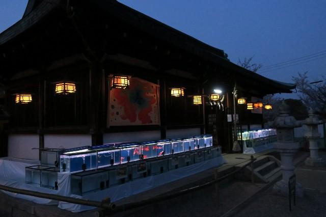 f:id:nishi0001:20180402210701j:image