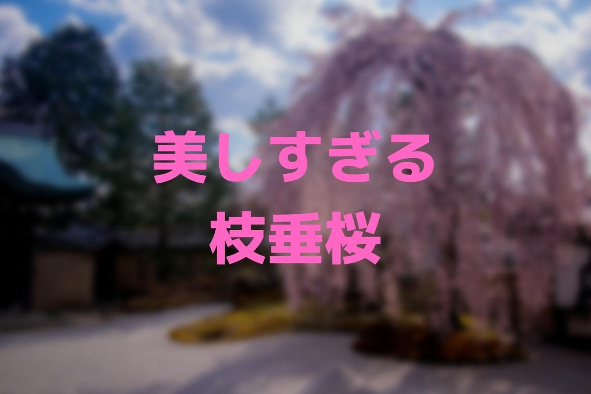 f:id:nishi0001:20190410163624j:plain