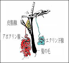 f:id:nishi005:20170126200216p:plain