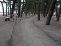 松林 Road
