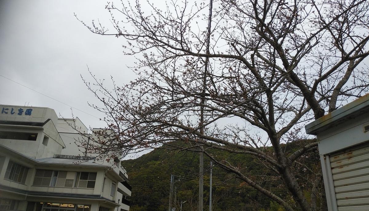 f:id:nishikien:20200401104938j:plain