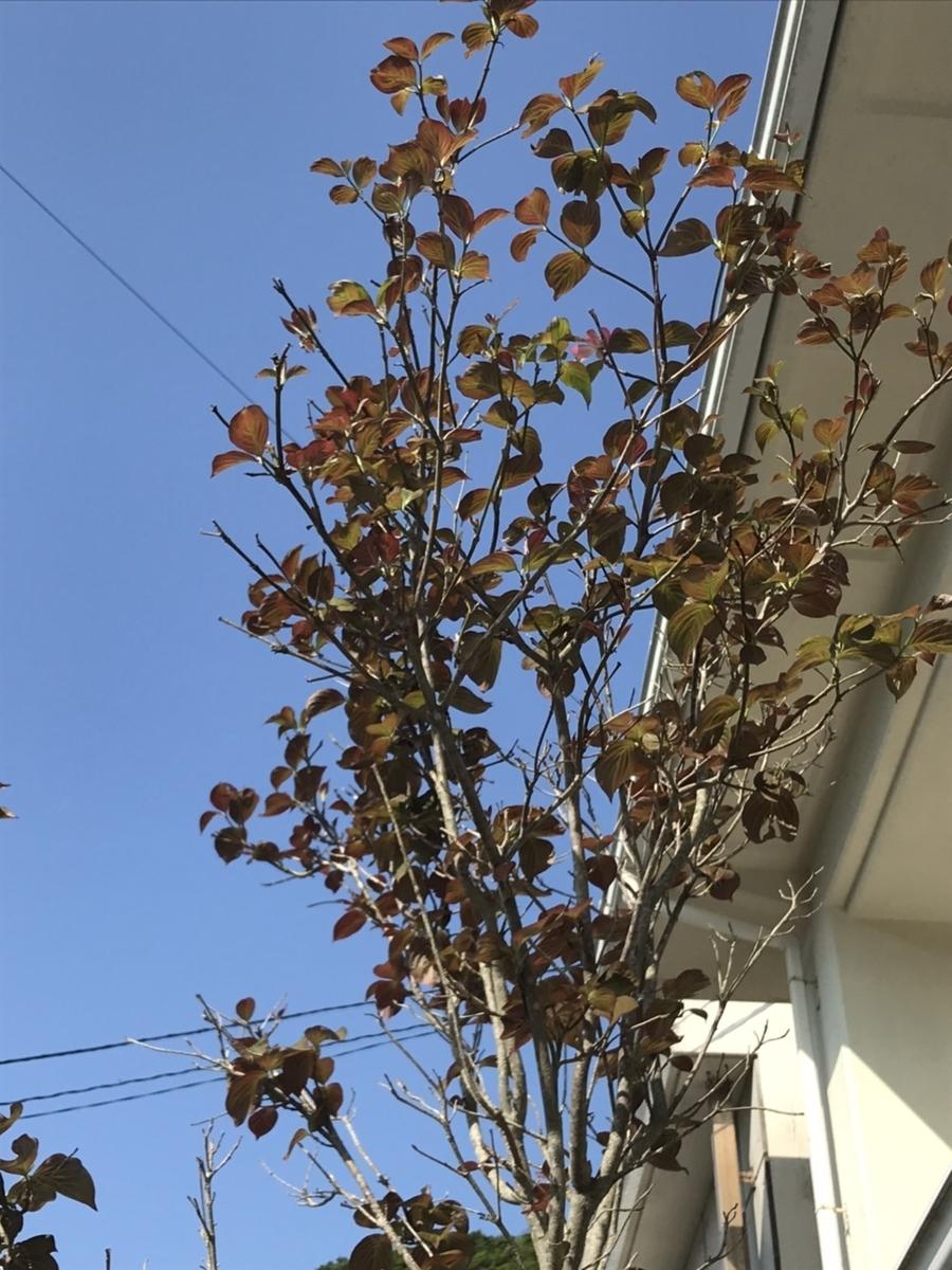 f:id:nishikien:20200505104946j:plain