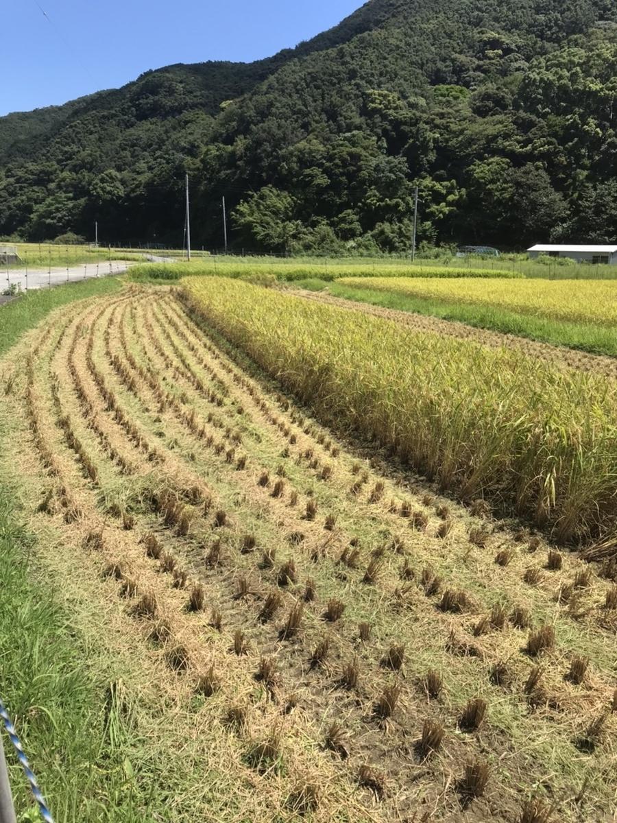 f:id:nishikien:20200820205800j:plain