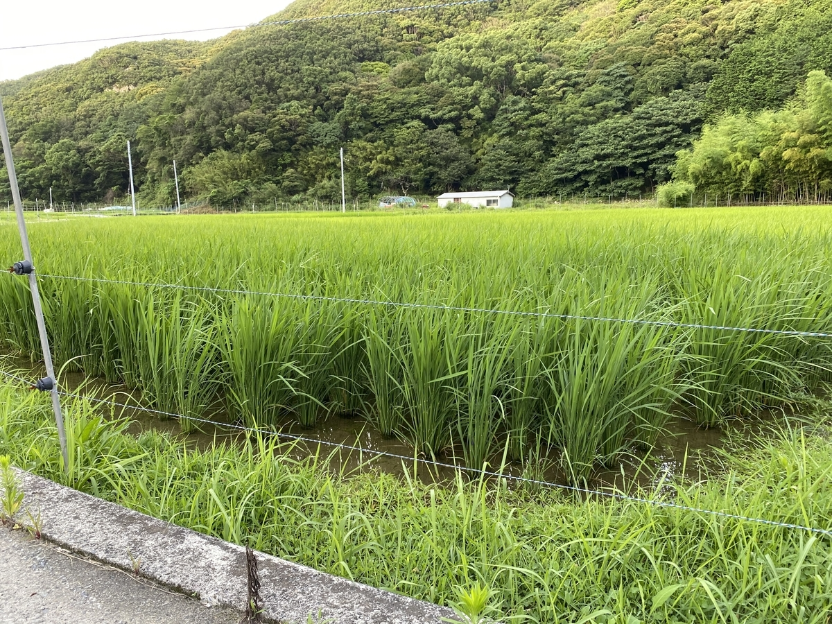 f:id:nishikien:20200820211103j:plain