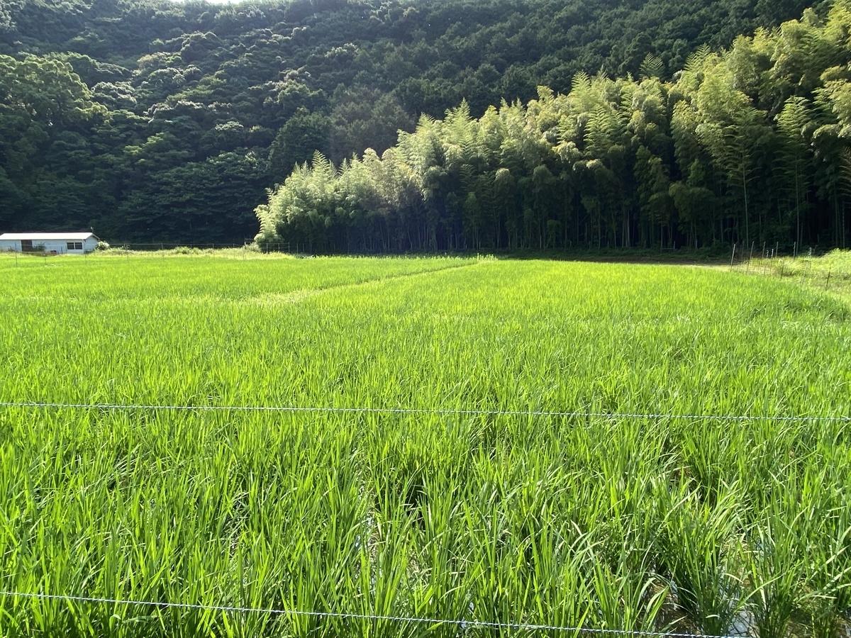 f:id:nishikien:20210626174225j:plain
