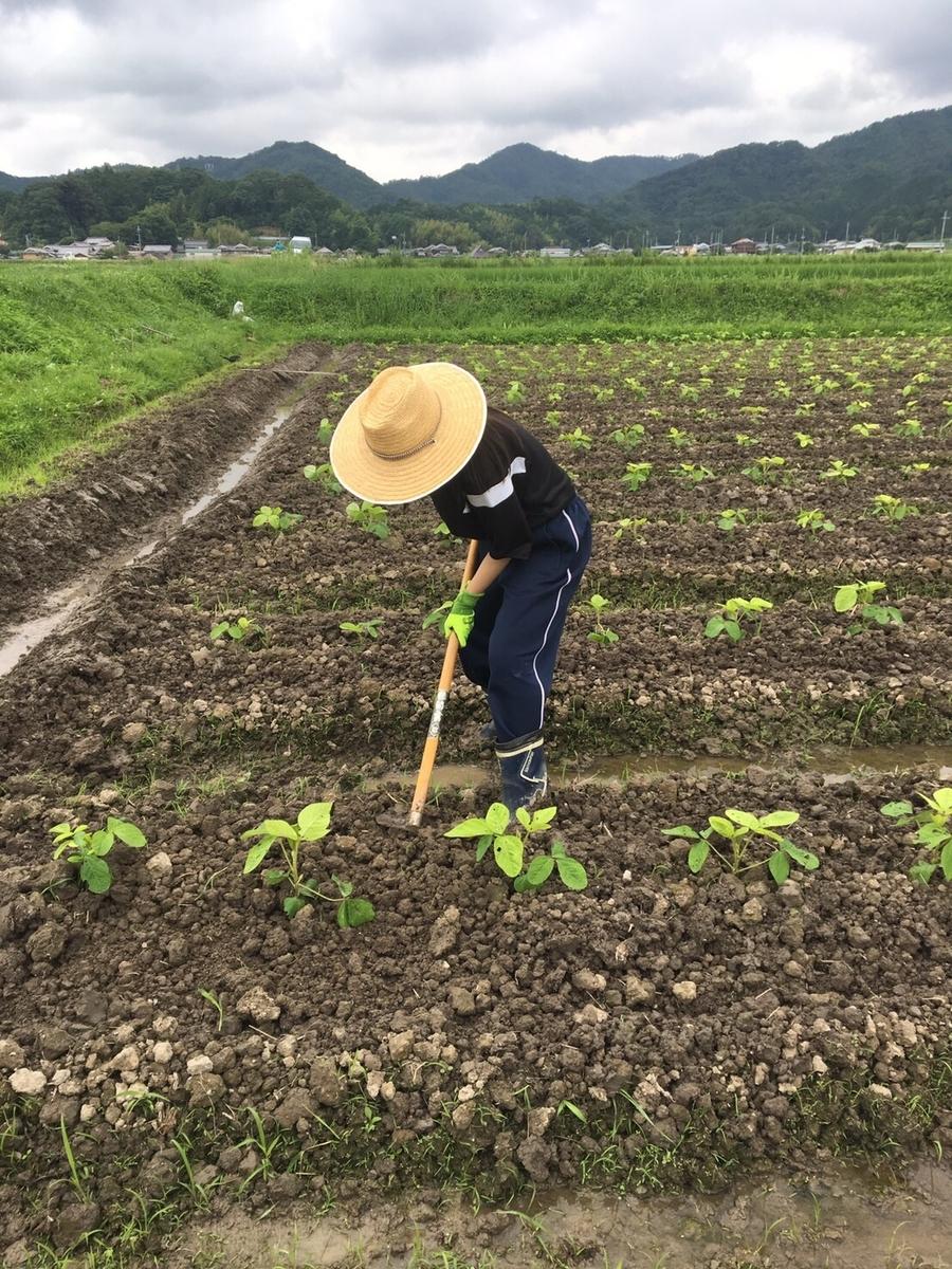 f:id:nishikikoi-sasayama:20190719013226j:plain