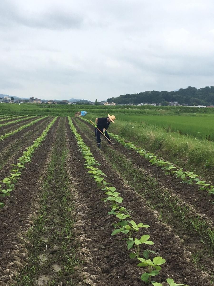 f:id:nishikikoi-sasayama:20190719013248j:plain