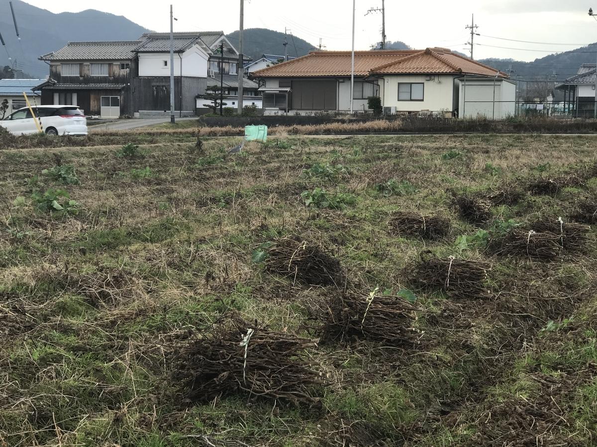 f:id:nishikikoi-sasayama:20200107142133j:plain