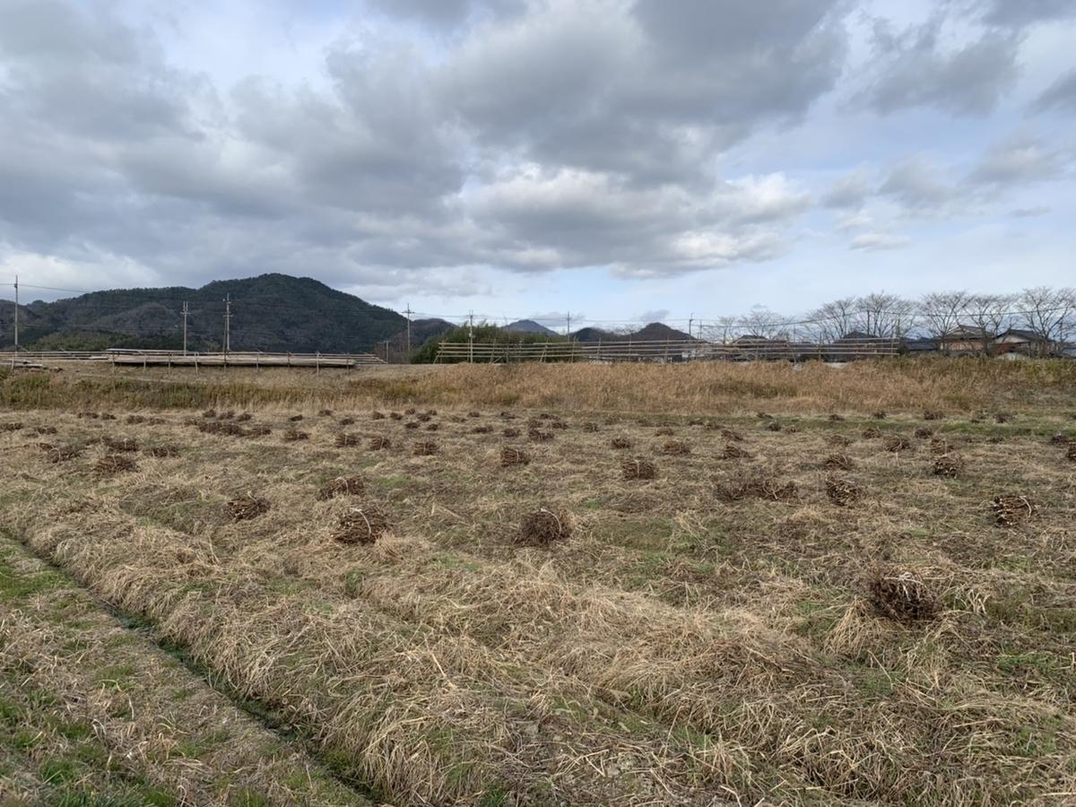 f:id:nishikikoi-sasayama:20200124110336j:plain
