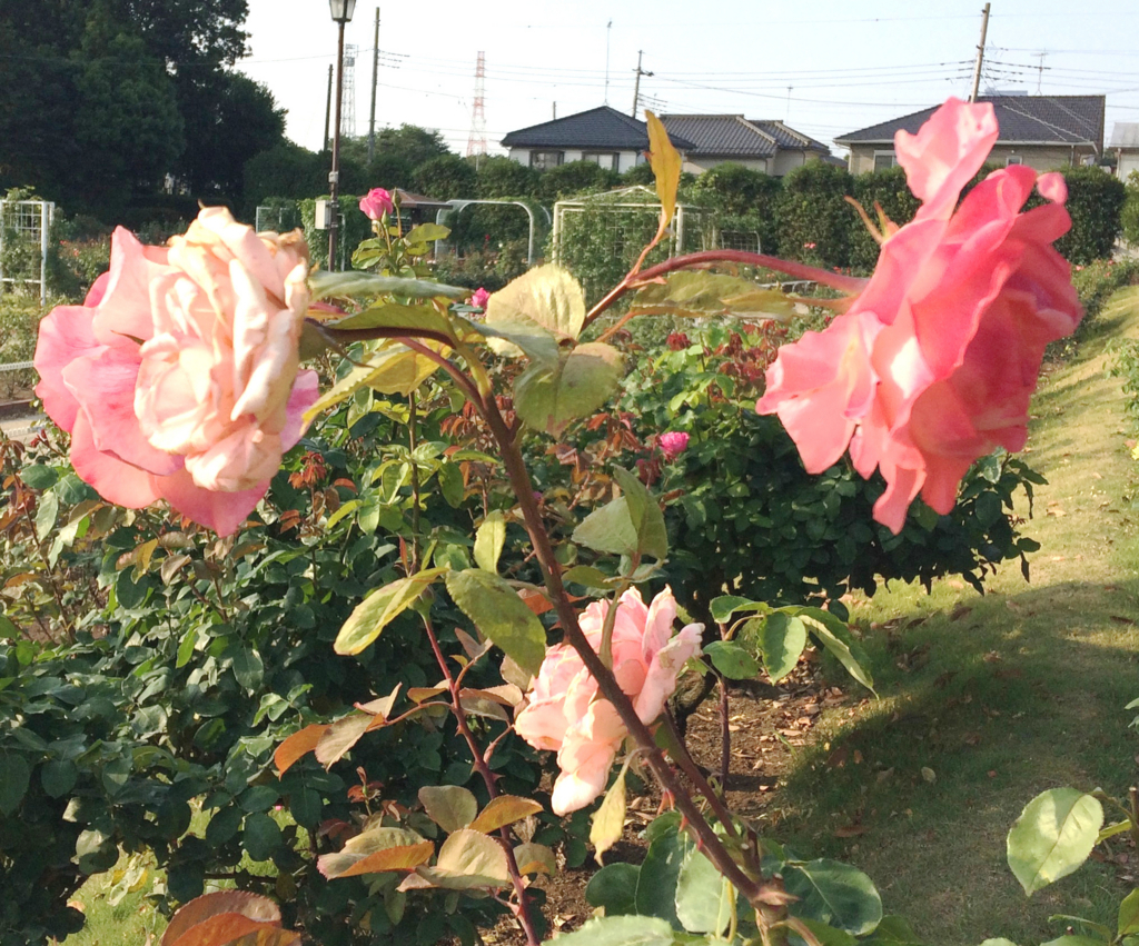 f:id:nishimarukanri:20180501170653j:plain
