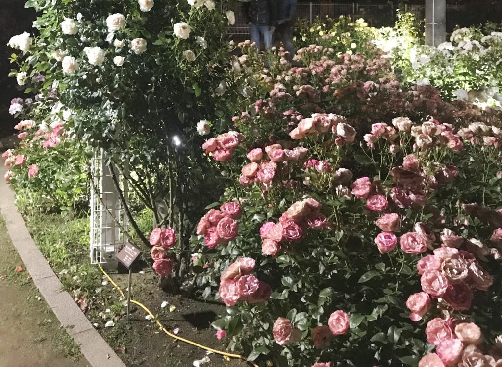 f:id:nishimarukanri:20180521140342j:plain