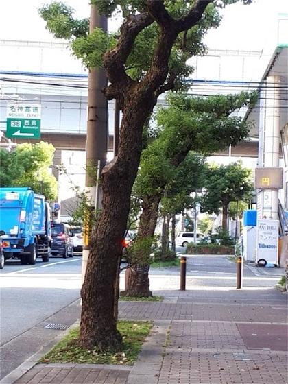 f:id:nishinomiya-minami:20210930132839j:plain