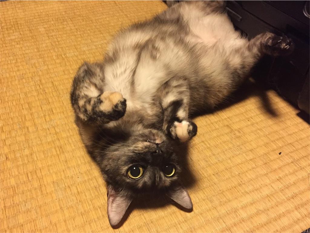 f:id:nishinoneko:20170710145845j:image