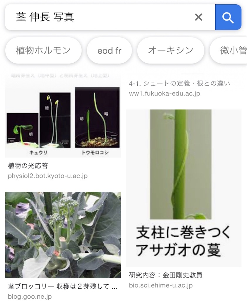 f:id:nishiokentoday:20190127155913j:image