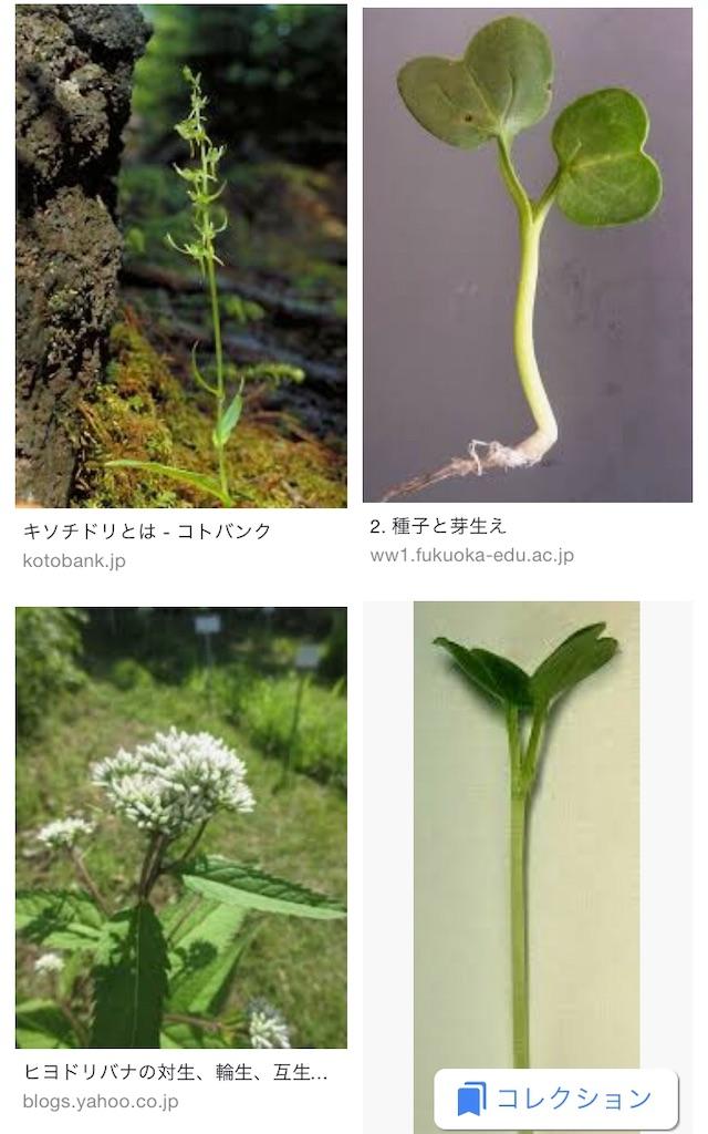 f:id:nishiokentoday:20190127155919j:image