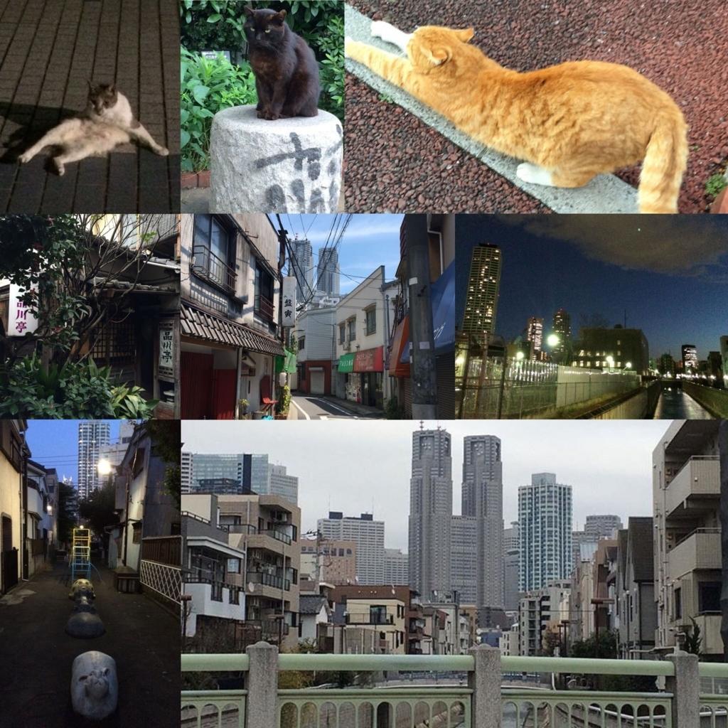 西新宿五丁目・西新宿四丁目、都庁とレトロな街並みの風景、神田川沿いの猫、品川亭など