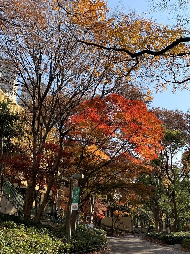 西新宿・新宿中央公園の紅葉