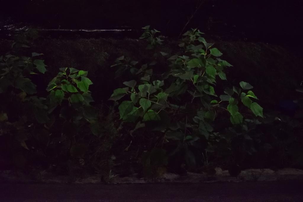 f:id:nisiki_satika:20161211003220j:plain
