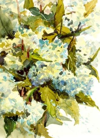 「紫陽花」の絵