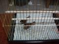 2羽の雀の雛