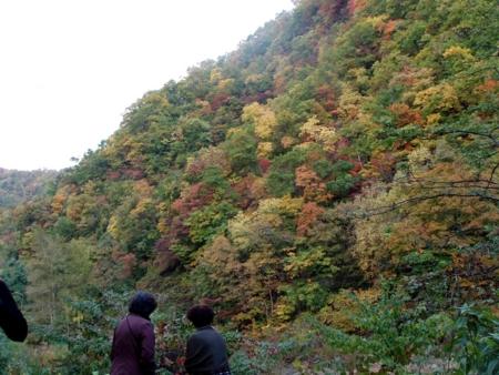 定山渓方面の紅葉(H23年10月12日)