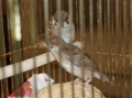 平成24年7月 神社で保護した雀