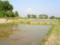 松澤家の水田