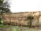 松澤家の水田で収穫された稲穂