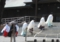 平成25年 札幌支部神社関係者大会 正式参拝 斎主以下祭員