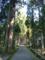 雄山神社中宮祈願殿 木々に囲まれた境内参道