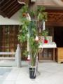 七夕の青竹を設置しました