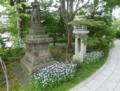 西野神社のミヤコワスレ