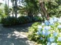 西野神社境内の紫陽花