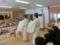 平成28年3月 西野神社人形供養祭