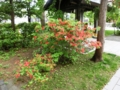 平成28年5月25日の西野神社境内