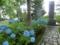 平成28年 西野神社境内の紫陽花