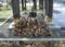 元日に境内で焚く篝火(かがりび)で使う薪