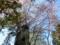 西野神社 春の境内の景色(平成29年5月6日)