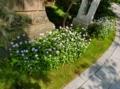平成29年6月中旬 西野神社境内の風景