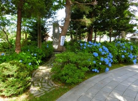 平成29年7月 西野神社 紫陽花の路(あじさいのみち)