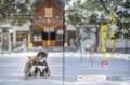 「poroco」2018年1月号 西野神社の記事