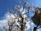 西野神社境内の春の風景(平成30年5月4日)