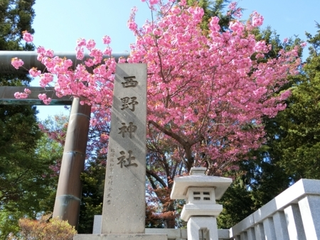 西野神社境内の八重桜(平成30年5月14日)