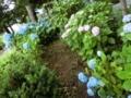 西野神社境内の紫陽花(平成30年7月中旬)