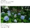 ブログで紹介されている西野神社の紫陽花