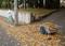 神社裏の落ち葉掃き掃除