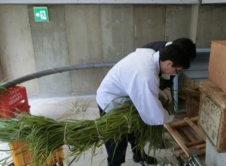 令和元年 西野神社夏越大祓「茅の輪」作成作業